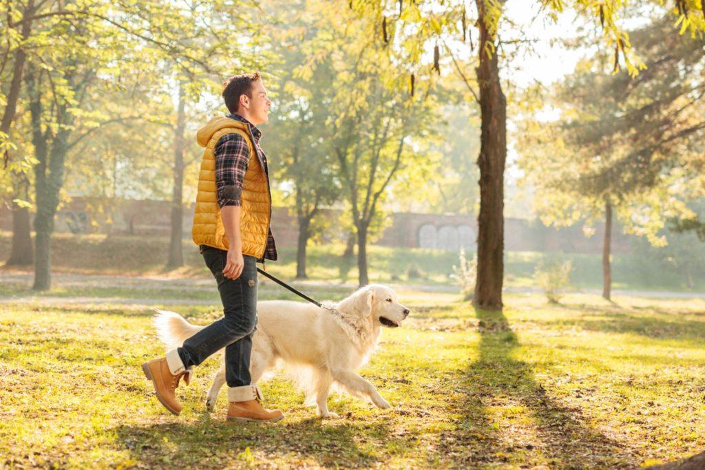 Почему необходимо больше ходить пешком